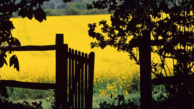 Summer field and gate